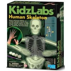 Esqueleto humano Brilla en la Oscuridad
