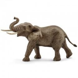 Elefante Africano Macho