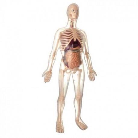 Kit de Anatomía