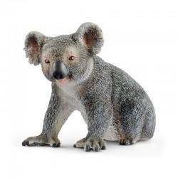 Koala Macho
